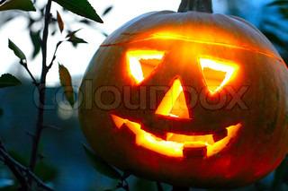 Billede af 'græskar, efteråret, halloween'