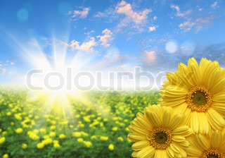 picture of fields full of colour flowers