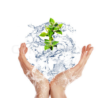 young sprout in the human hand in the water flow