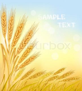Baggrund med modne gule hvede ører , landbrugs vektor illustration