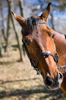 Beautiful race horse in a spring wood