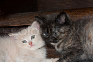 Black and white kitten next to each other