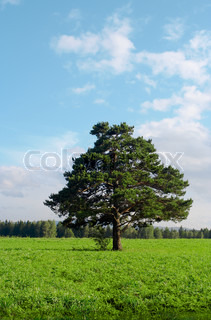 alone tree in field under blue sky