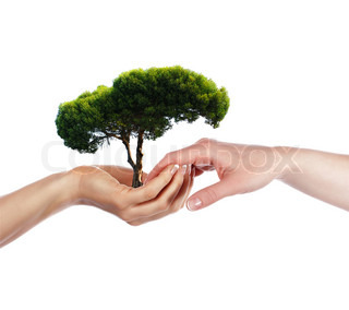 The palms and tree - a symbol of environmental protection