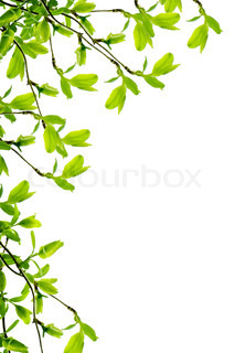 spring branch frame isolated on white