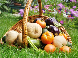 fresh organicvegetables in a basket on a grass