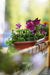 Flowerpot with lilac flowers in outdoor cafe