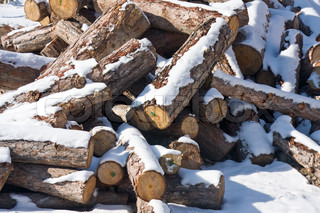 Stacked pine fire wood under the snow