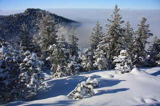 Winter Landscape in the mountains with snow fir trees, Bulgaria