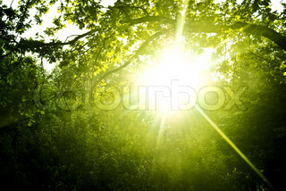 Early in the morning the sun hardly makes the way through dense foliage of trees