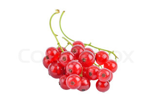 Branch of berry red currant, isolated on a white background