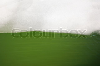 This photograph represent still water full of green algae and a piece of ice