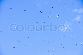 large flock of birds in the blue sky