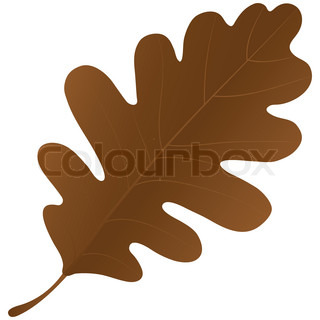 Autumn oak leaf isolated over a white background