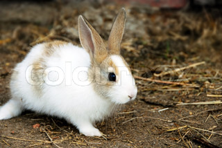 one adorable young white bunny rabbit outdoors