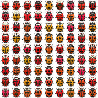 A sheet of ladybug illustrations that tile seamlessly as a pattern