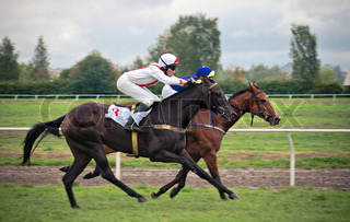 Two horses ar finish stage of flat race distance