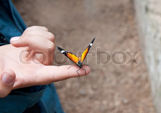 Beautiful orange butterfly on child's hand, close up