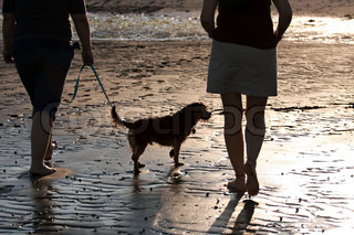 Back lit portrait of two women walking a cute borkie dog at the beach