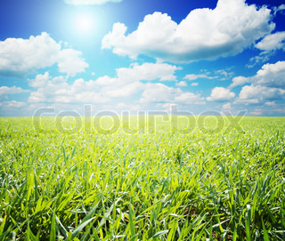green and blue color nature field with sun