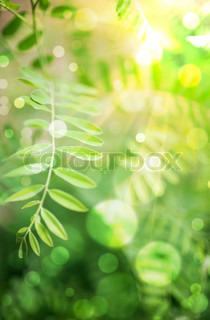 floral abstract background with sun beam
