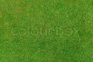 Green short grass baclground close up