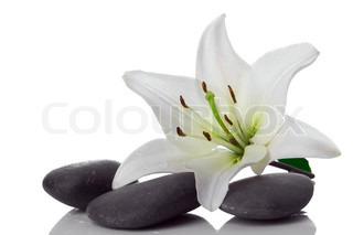 madonna lilje og spa sten på hvidt