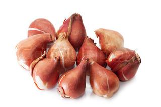 En gruppe af tulipanløg isoleret over hvide