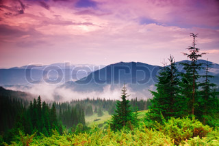 Landscape with fog in mountains and rows of trees