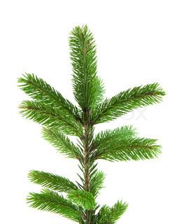 Pine pels gren isoleret på hvidt til jul dekoration