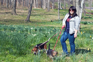 A young woman walking her two dogs in the park on a sunny day