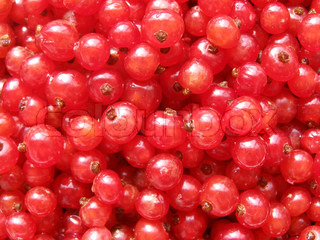 red currant - sweet and sour berries close up