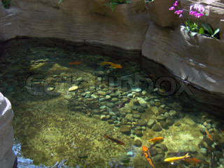 A nice goldfish pond.