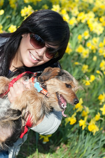 A cute terrier mix breed pup in the arms of a beautiful Spanish woman posing in front of the yellow daffodil flowers in the Spring time