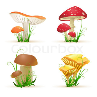 illustration of different mushroom trees on white background