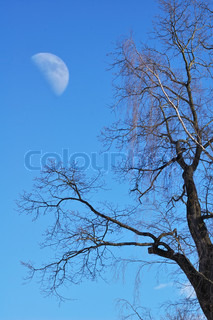 Tree and moon in sky at the midday