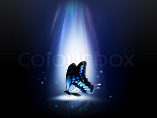 blue butterfly in a ray of light at night