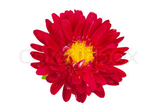 aster red on a white background