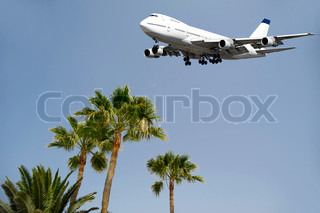 Jumbo is flying over palms ready to land