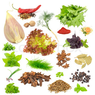 Spice and Herb Set (Garlic, Chili Pepper, Dill, Mizuna, Nutmeg, Lettuce, Parsley, Tandoori Masala, Basil, Soup Seasoning, Mint, Fennel, Anise, Bay Leaves, Chives, Cloves, Celery, Juniper Berries, Caraway Seeds) Isolated on White Background
