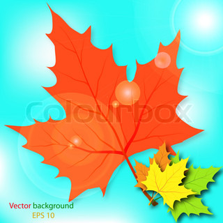 Multi-colored maple leaves in the light of sun patches of light