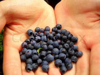 Blueberries in hands .