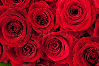 beautiful red roses, background texture