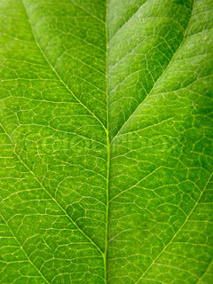 green leaf texture close up for you
