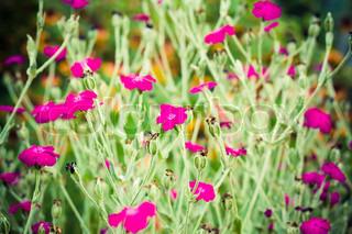 Beautiful wild pink flowers
