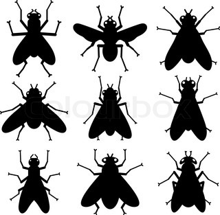 black insect silhouettes on white