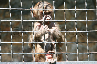 Sad little monkey in a cage