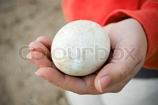 A closeup of a large duck or goose egg resting in the palm of the hand