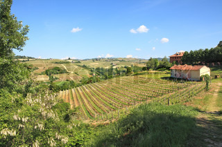 View on hills and vineyards of Langhe area in Piedmont, northern Italy