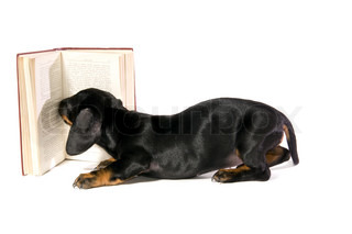 Black dog puppy Lays with a book and Reads on white background isolated
